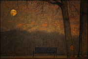 Tom York Images Prints - An Empty Park Bench Print by Tom York