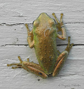 Tree Frog Prints - An Inch of Songs Print by Suzanne Schaefer