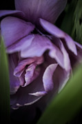 Iridaceae Framed Prints - An Intimate Look Framed Print by Wenata Babkowski