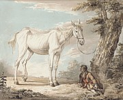 Bridle Framed Prints - An Old Grey Horse Tethered to a Tree A Boy Resting Nearby Framed Print by Paul Sandby