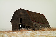 Wooden Barns Posters - An Old Leaning Barn In North Dakota Poster by Jeff  Swan