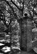 Black And White Nature Landscapes Posters - An Open Gate 2 bw Poster by Mel Steinhauer