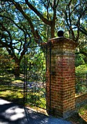 Spanish Moss Photos - An Open Gate 2 by Mel Steinhauer