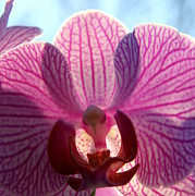 Orchids Art - An Orchid View by Neal  Eslinger
