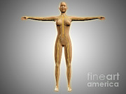 Anatomy Of Female Body With Nervous Print by Stocktrek Images
