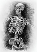 Human Skeleton Drawings - Anatomy Study Mister Skeleton by Irina Sztukowski