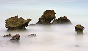 Mist Metal Prints - Ancient Coral Metal Print by Adam Romanowicz