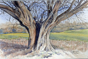 Maddy Swan - Ancient English Tree