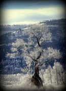 Snowstorm Prints Prints - Ancient Ice Tree Print by C Ray  Roth
