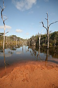 Flooding Photos - Ancient Lagoon by Carl Koenig