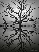 Contemplative Digital Art Metal Prints - Ancient Oak Tree Montage Metal Print by Dave Gordon