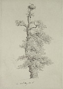 Stork Drawings Prints - Ancient Oak Tree with a Storks Nest Print by Caspar David Friedrich