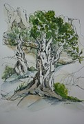 Greece Drawings - Ancient Olive Grove by Therese Alcorn