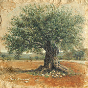 Olive  Drawings - Ancient olive tree by Miki Karni