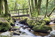 Cornwall Prints - Ancient Woodland at Golitha Falls Print by Helen Hotson