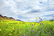 Kamloops Prints - And A Heaven In A Wild Flower Print by Theresa Tahara