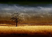 Lone Metal Prints - And the rains came Metal Print by Holly Kempe