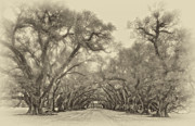 Live Oaks Digital Art Framed Prints - And Time Stood Still sepia Framed Print by Steve Harrington