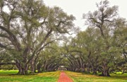 Oak Alley Plantation Photo Prints - And Time Stood Still Print by Steve Harrington