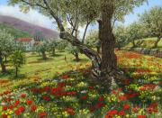 Poppies Art Paintings - Andalucian Olive Grove by Richard Harpum
