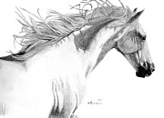 Mane Drawings - Andalusian Fusion by Kayleigh Semeniuk