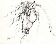 Wild Horses Drawings Metal Prints - Andalusian Horse Drawing 04 11 2013 Metal Print by Angel  Tarantella