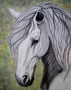 Wild Horse Drawings - Andalusion  by Tanya Arends