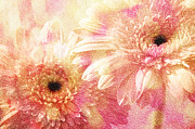All - Andee Design Gerber Daisies 1 by Andee Photography