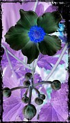 Horticulture Mixed Media Posters - Anemone Flower 2 Poster by Chalet Roome-Rigdon