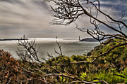 Garrison Cove Photos - Angel Island State Park California Looking at The Golden Gate in the fog - HDR by David Rigg