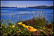 Nike Photo Prints - Angel Island State Park California - Poppies in the San Francisco Bay Viewing Golden Gate Bridge Print by David Rigg