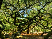 Beautiful Tree Framed Prints - Angel Oak 006 Framed Print by Lance Vaughn