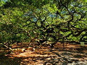 Beautiful Tree Photos - Angel Oak 007 by Lance Vaughn