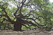 Live Oak Tree Prints - Angel Oak II Print by Suzanne Gaff
