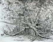 Angel Drawings - Angel Oak by Jim Hubbard