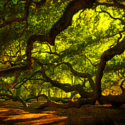 Trees And Palm Trees - Angel Oak Limbs Crop 40 by Susanne Van Hulst