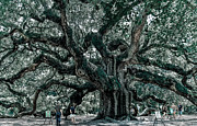 Philip Heim - Angel Oak