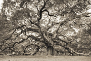 Big Tree Posters - Angel Oak Tree of Life Sepia Poster by Dustin K Ryan