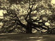 Old Tree In Charleston Prints - Angel Oak Tree Sepia Print by Susanne Van Hulst