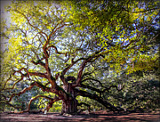 Angel Oak Posters - ANGEL of TIME Poster by Karen Wiles