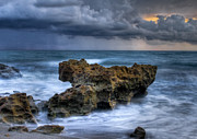 Coral Cove Prints - Angry Print by Debra and Dave Vanderlaan