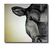 Black Angus Framed Prints - Angus Framed Print by Samantha Roberts