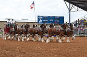 Handcrafted Art - Anheuser Busch Clydesdales Pulling a Beer Wagon USA Rodeo by Sally Rockefeller