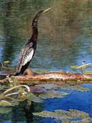 Anhinga Paintings - Anhinga by Carolyn  English