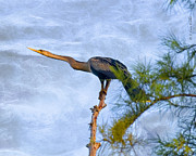 Cypress Digital Art Prints - Anhinga Resting Atop Cypress Print by J Larry Walker