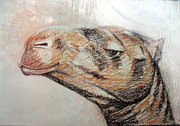 Runner Pastels - Animal 30 - Camel by Mohd Raza-ul Karim