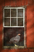 Farm Life Posters - Animal - Bird - Chicken in a window Poster by Mike Savad