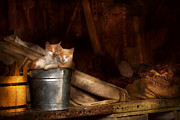 Felines Photo Prints - Animal - Cat - Bucket of fun  Print by Mike Savad
