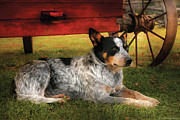 Charming Metal Prints - Animal - Dog - Always Faithful Metal Print by Mike Savad