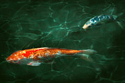 Calming Metal Prints - Animal - Fish - Koi - Another fish story Metal Print by Mike Savad